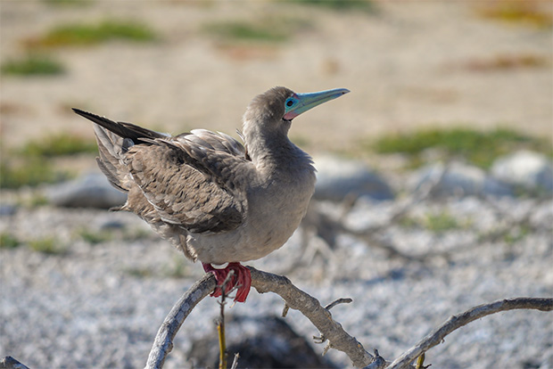 Cruises to the Galapagos Islands for 2 people September 2017