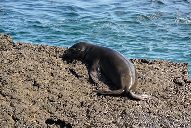 Cruises to the Galapagos Islands for 5 people October 2017