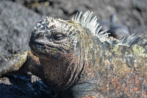 Cruises to the Galapagos Islands for 9 people September 2017