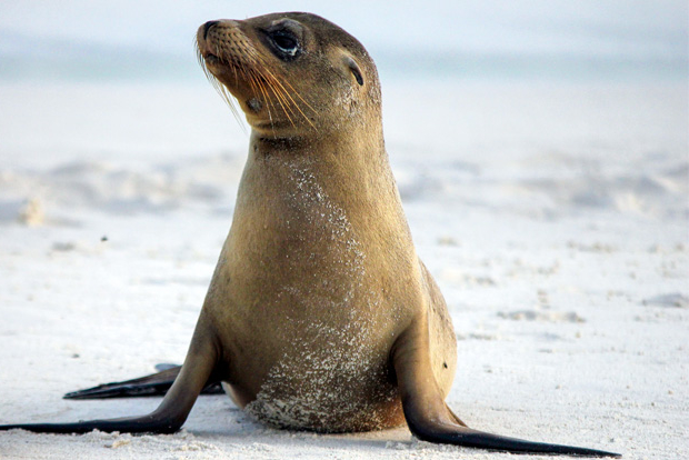 Offer Cruises to the Galapagos Islands September 2017