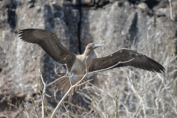 Travel aboard cruises to Galapagos Islands 2017