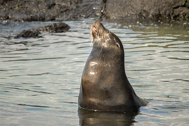 Commemorate a birthday in Galapagos Islands