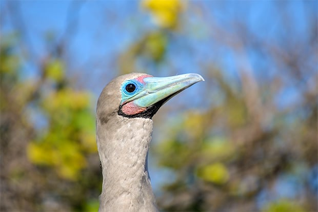 Cruise to the Galapagos Islands from Afghanistan