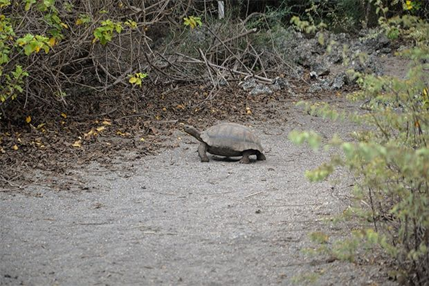 Cruise to the Galapagos Islands from Bangladesh
