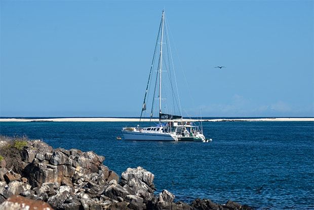 Cruise to the Galapagos Islands from Cameroon
