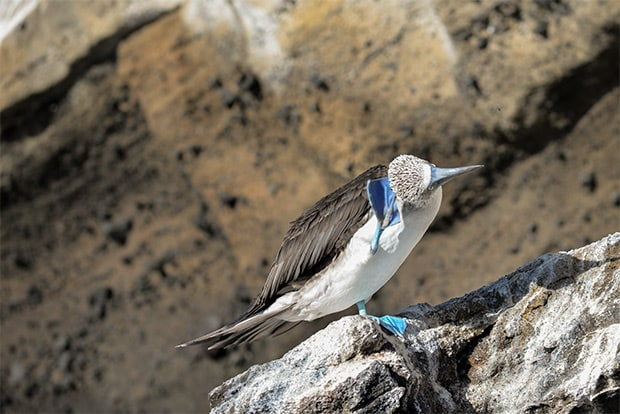 Cruise to the Galapagos Islands from Comoros