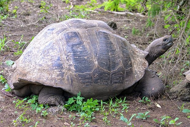 Cruise to the Galapagos Islands from Eritrea