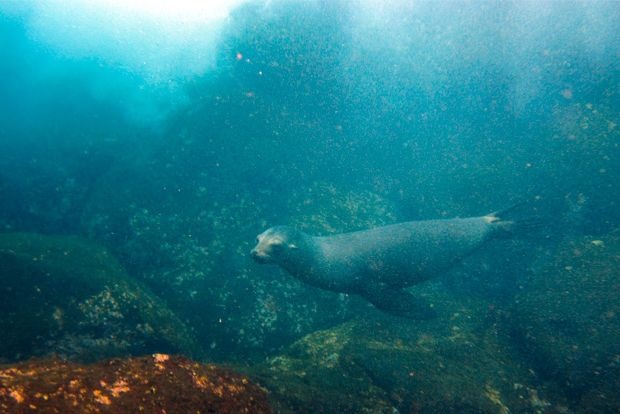 Cruise to the Galapagos Islands from Estonia