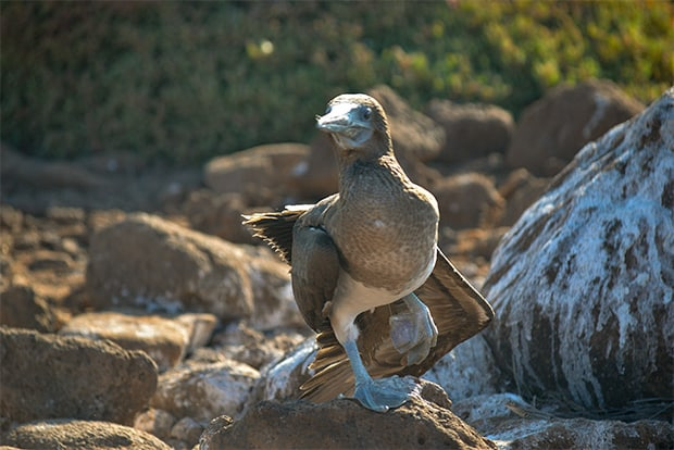 Cruise to the Galapagos Islands from Finland