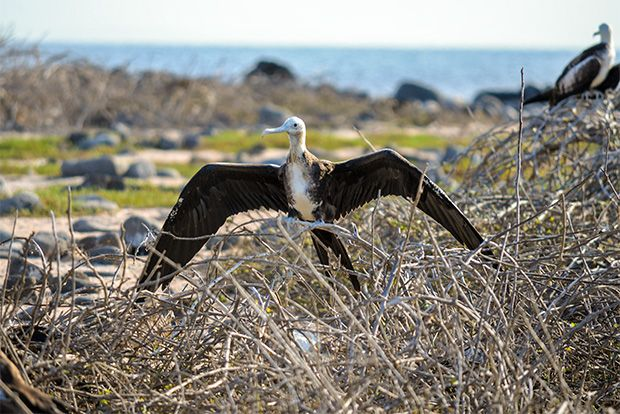 Cruise to the Galapagos Islands from Gabon