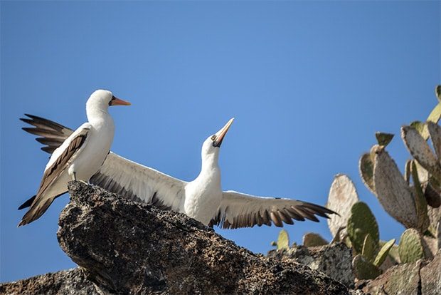 Cruise to the Galapagos Islands from Guatemala