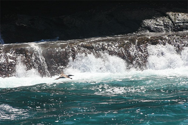 Cruise to the Galapagos Islands from Ivory Coast