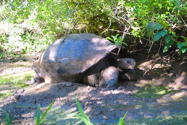 Cruise to the Galapagos Islands from Kenya