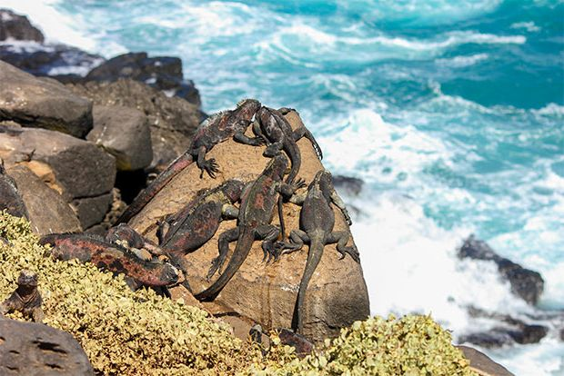 Cruise to the Galapagos Islands from Maldives