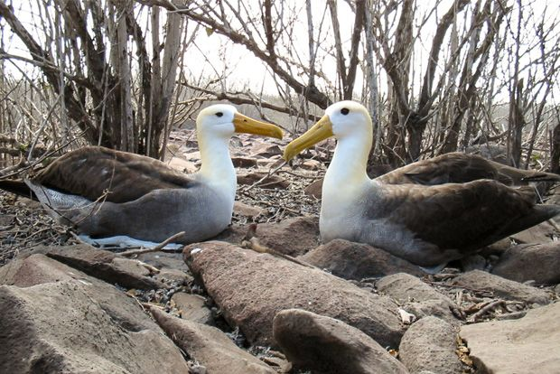 Cruise to the Galapagos Islands from Malta