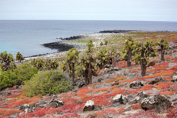 Cruise to the Galapagos Islands from Micronesia