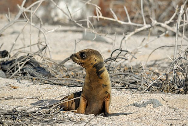 Cruise to the Galapagos Islands from Mozambique