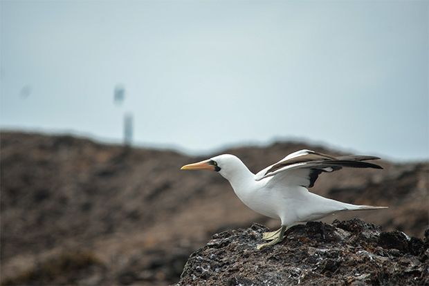 Cruise to the Galapagos Islands from Namibia