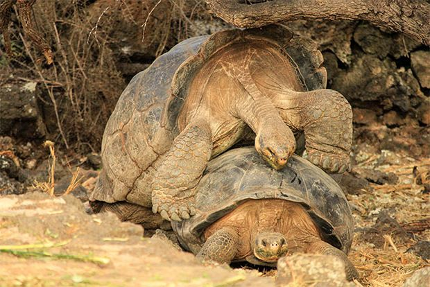 Cruise to the Galapagos Islands from Nigeria