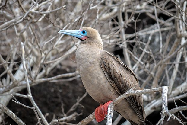 Cruise to the Galapagos Islands from Russia