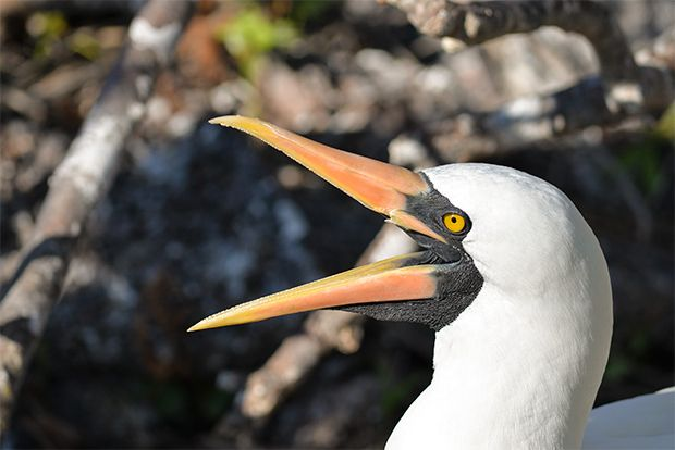 Cruise to the Galapagos Islands from Seychelles