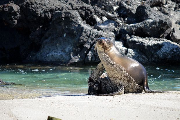 Cruise to the Galapagos Islands from Singapore