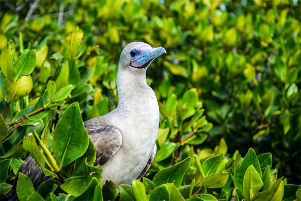 Cruise to the Galapagos Islands from Ukraine
