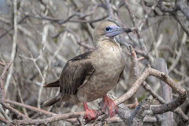 Cruise to the Galapagos Islands from United Arab Emirates