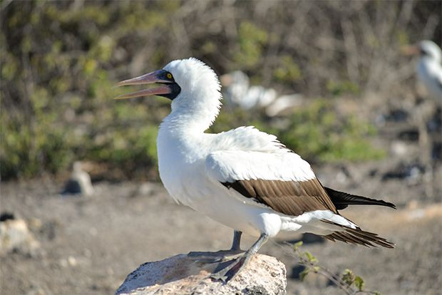 Cruise to the Galapagos Islands from Venezuela