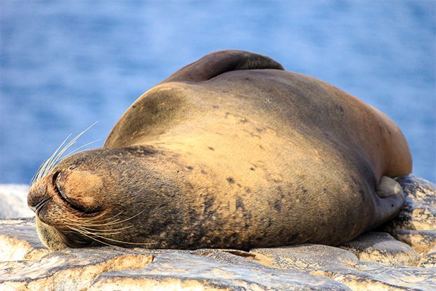 Cruises to Galapagos Islands in June
