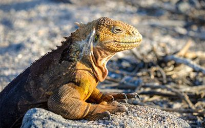 Cruises to Galapagos Islands in May