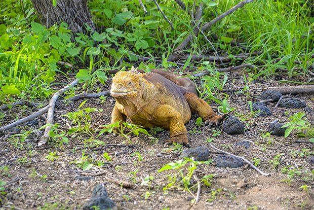 Marriage in Galapagos Islands