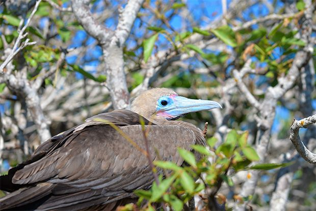 Travel in Cruise to Galapagos Islands in Autumn