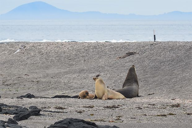 Travel in Cruise to Galapagos Islands in December