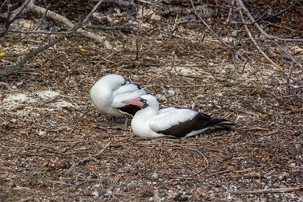 Travel in Cruise to Galapagos Islands in February