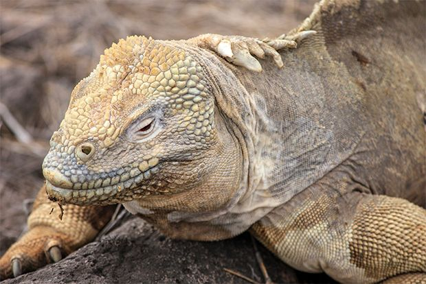 Travel in Cruise to Galapagos Islands in June