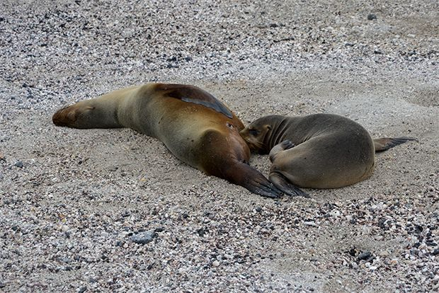 Travel on Cruise to Galapagos Islands for next year