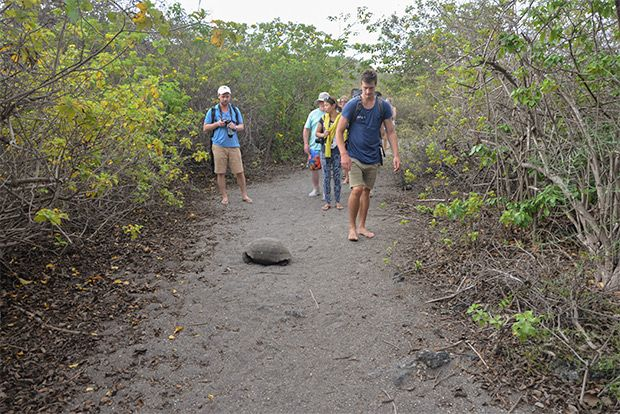 Cruises to the Galapagos Islands 2018