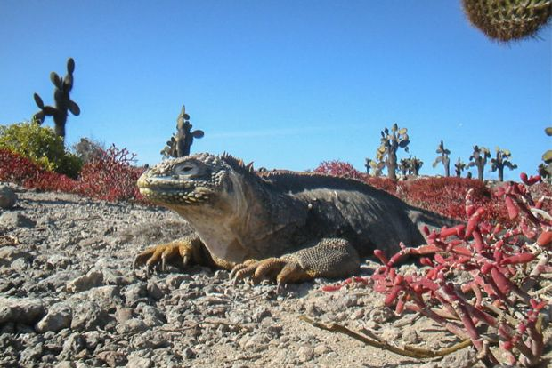Cruises to the Galapagos Islands for 1 person February 2018