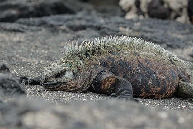 Cruises to the Galapagos Islands for 14 people January 2018