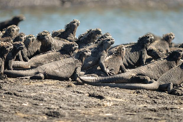 Cruises to the Galapagos Islands for 15 people February 2018