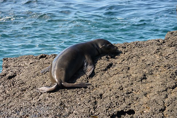 Cruises to the Galapagos Islands for 16 people February 2018