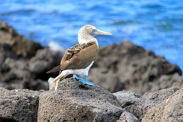 Cruises to the Galapagos Islands for 16 people January 2018