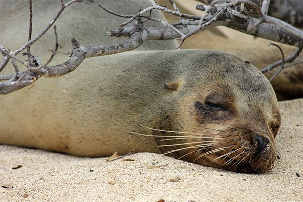 Cruises to the Galapagos Islands for 4 people February 2018
