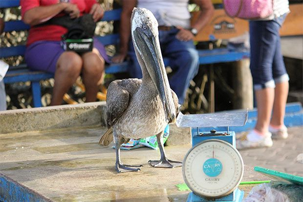 Cruises to the Galapagos Islands for 6 people February 2018