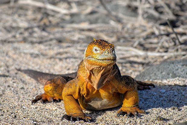 Offer Cruises to the Galapagos Islands February 2018