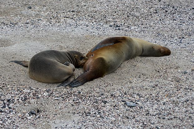 Parties in Galapagos Islands January 2018