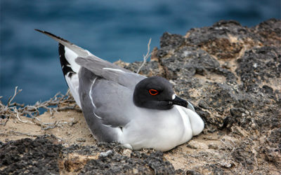 Study Tour to the Galapagos Islands February 2018