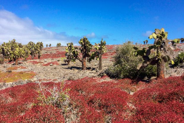 Tour Packages to the Galapagos Islands January 2018