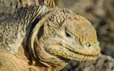 Galapagos Islands cruises: Top 7 must-to-go places in Quito